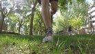 Adidas Ultraboost All Terrain: Adidas Ultraboost All Terrain: Unas zapatillas para todo