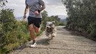 Hoka One One Arahi 4: Compartiendo kilómetros con ellas y nuestras mascotas